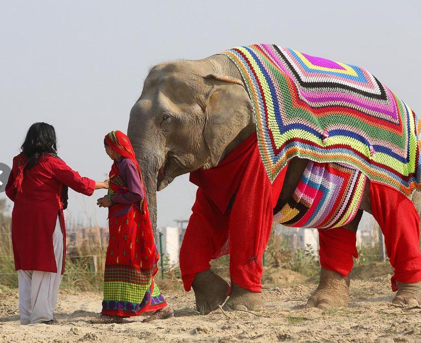 اقدام جالب زنان هندی برای حفاظت از فیلها در برابر سرما+تصاویر