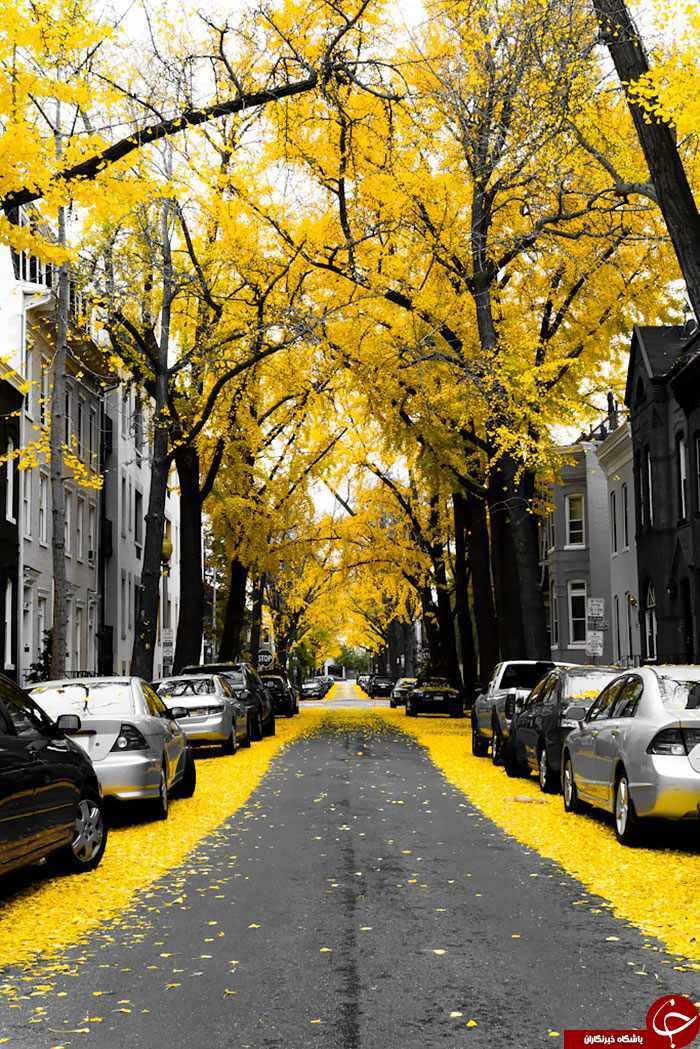 شگفت انگیزترین و زیباترین خیابان های جهان+تصاویر