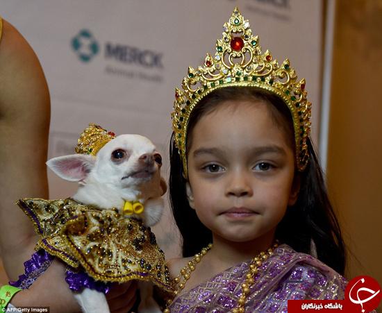فشن شوی حیوانات خانگی +تصاویر