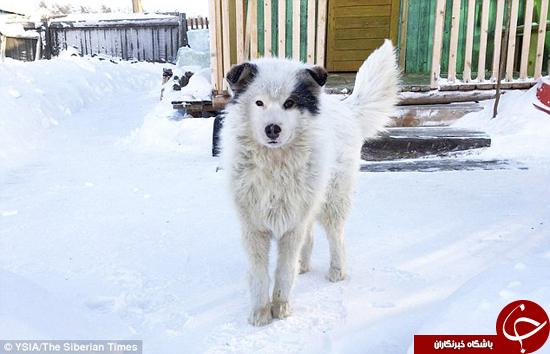 سگی که جان بچهای را نجات داد +تصاویر