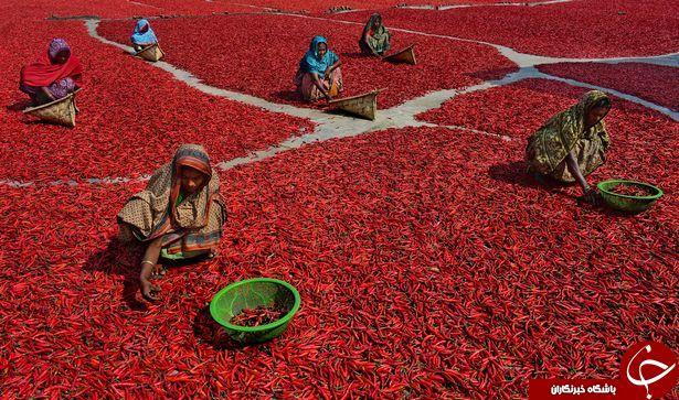 فرش قرمز طبیعی شگفت انگیز را در این تصاویر ببینید + تصاویر