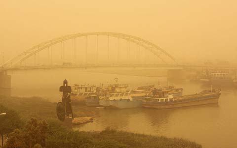 منشا گرد و غبار اخیر خوزستان داخلی است/برای حفاظت از درختان قانون مصوب وجود دارد