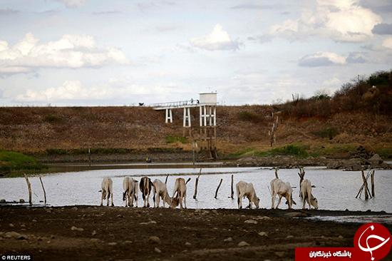 خشکسالی در برزیل بیداد میکند +تصاویر