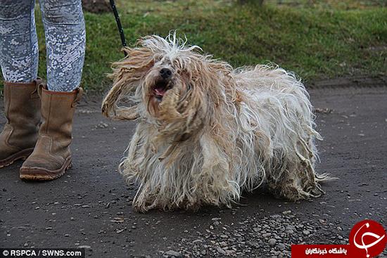 سگهایی که اصلاح نشدند +تصاویر