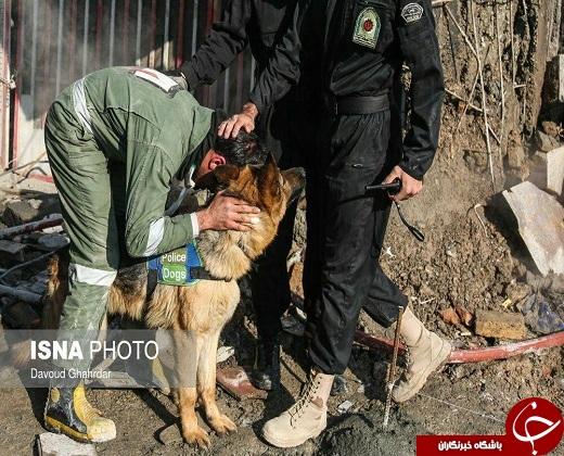 تشکر مامور آتشنشانی از سگ زندهیاب +عکس