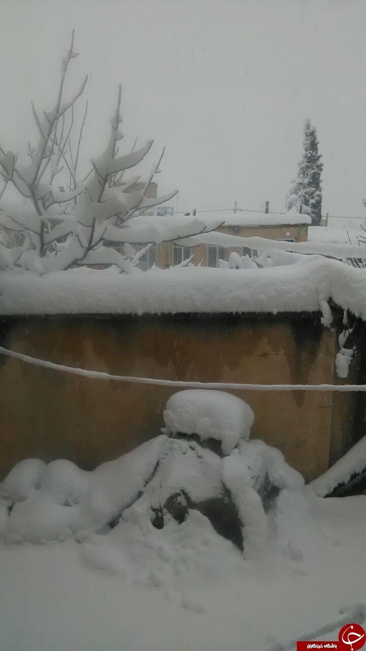 بارش 70سانتی برف در شهرستان دالاهو + تصاویر