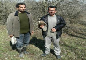 دستگیری شکارچی متخلف در آمل