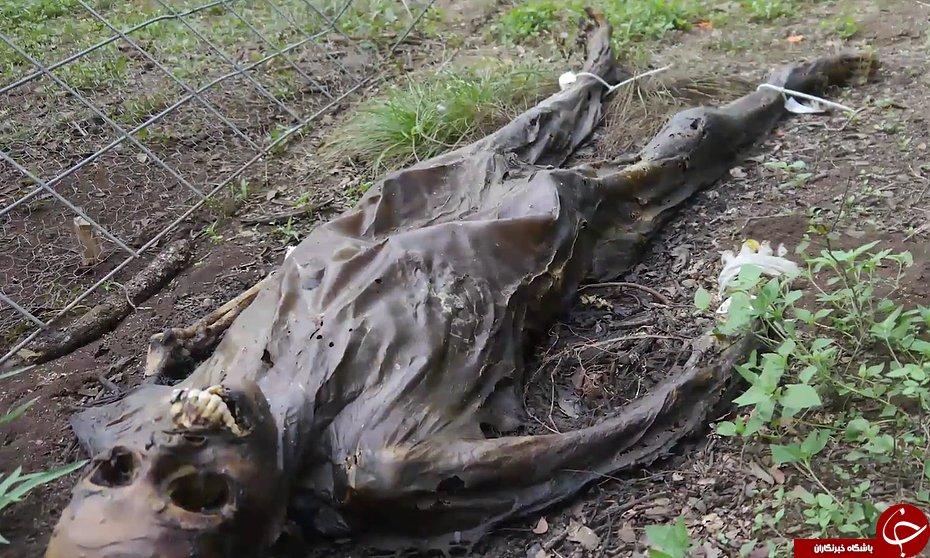 مزرعه وحشت انگیز مردگان در آمریکا  + تصاویر (18+)