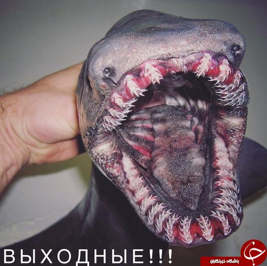 مرموز ترین موجوداتی که یک ماهیگیر روسی در اقیانوس دیده است + تصاویر