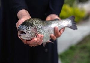 افزایش تولید ماهی در سال جدید
