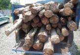 باشگاه خبرنگاران - کشف 3 تن چوب قاچاق در آستارا