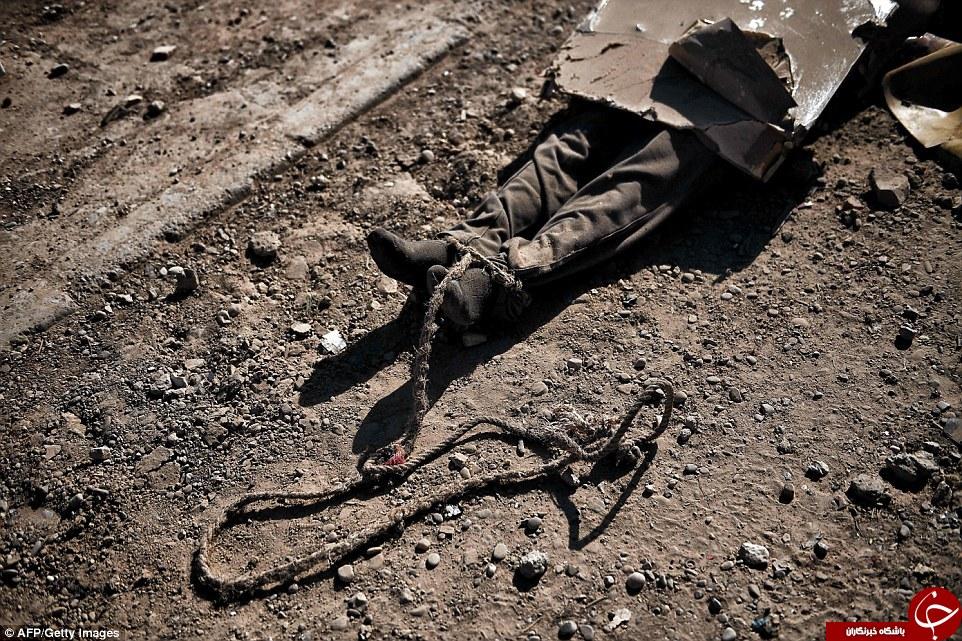 اجساد داعشیها