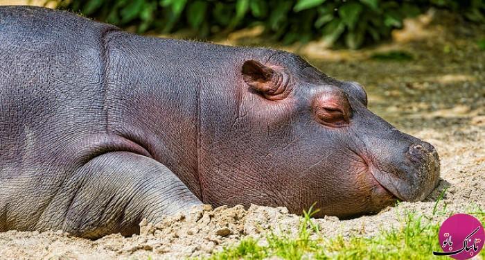 حیواناتی با توانایی های خارق العاده +تصاویر