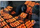 باشگاه خبرنگاران - افزایش تعداد مراکز فروش میوه شب عید نسبت به سال گذشته