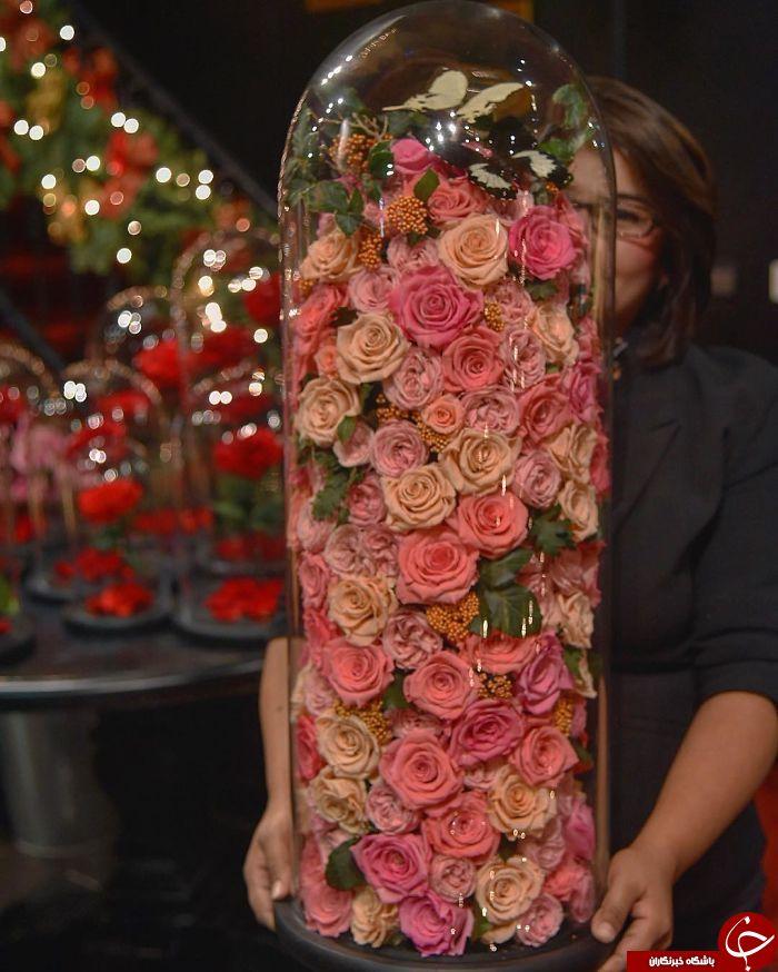 رزهای زیبا با طول عمر 3 سال+تصاویر