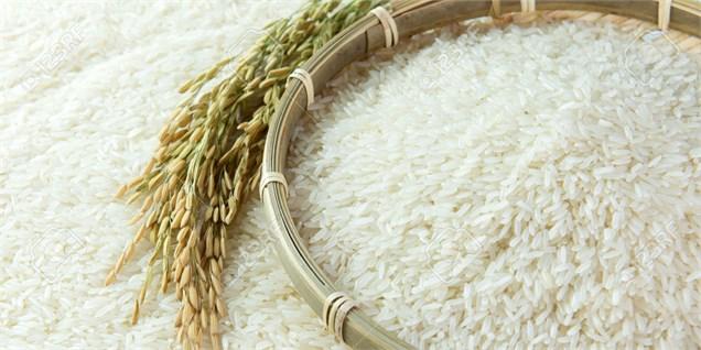 باشگاه خبرنگاران -نرخ برنج هاشمی در بازار چقدر است؟
