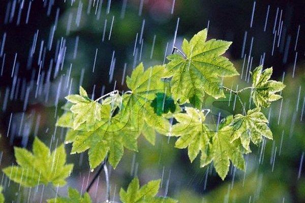 آغاز موج جدید بارش ها در استان بوشهر از روز یکشنبه