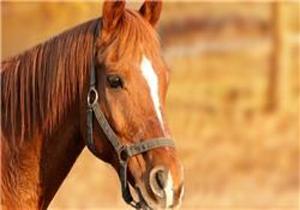 ویژگیهای خاص «اسب»