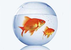هشدار نسبت به ماهیهای قرمز ناسالم