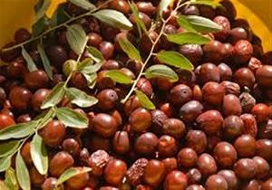میوه ای برای کنترل قند خون شما