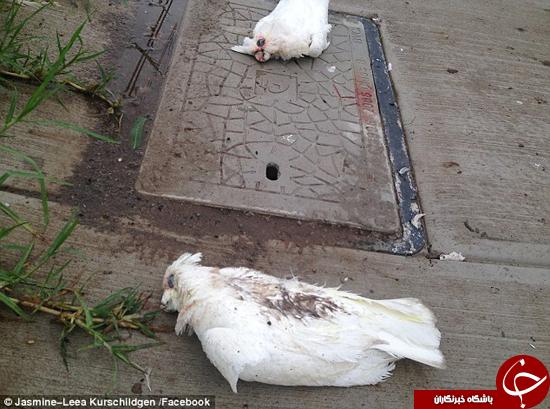 باشگاه خبرنگاران -پرندگان سوخته +تصاویر