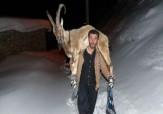 باشگاه خبرنگاران -نجات کل کوهی گرفتار در برف توسط جوانان روستای «ویسیان» + فیلم و تصاویر