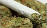 باشگاه خبرنگاران - پارلمان هلند کاشت ماریجوانا را قانونی کرد