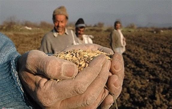 باشگاه خبرنگاران -گلایه کشاورزان از نرخ خرید تضمینی به حق است/ تعیین نرخ خرید تضمینی گندم بر مبنای تورم یک ضرورت است