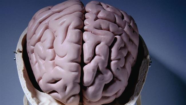 رابطه مغز با چاقی و دیابت