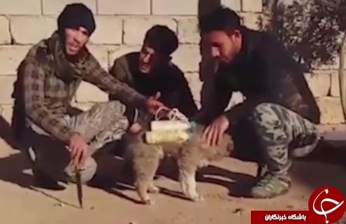 سگ های انتحاری داعش + تصاویر