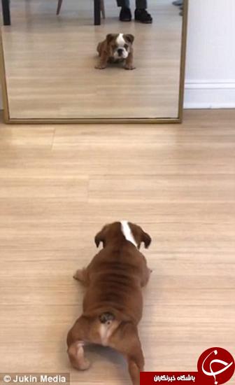 این سگ با خودش هم دعوا دارد +تصاویر