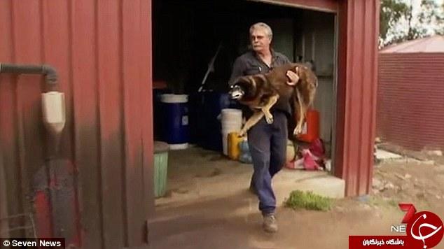 پیرترین سگ جهان درگذشت+تصاویر