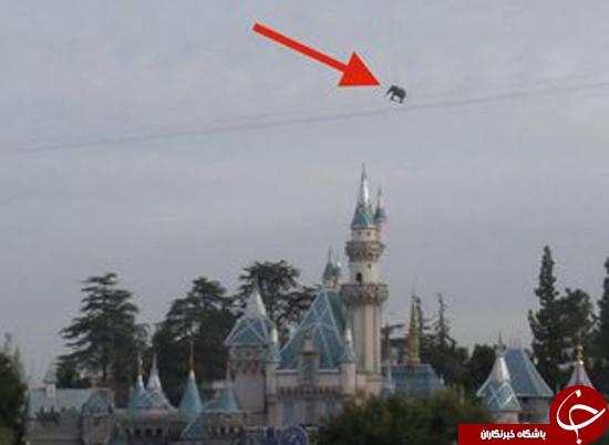 پرواز فیل بالای آسمان دیزنی لند + عکس
