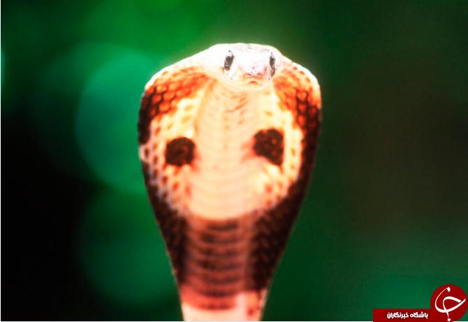 تصاویری از سمیترین حیوانات جهان