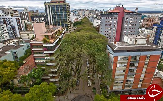 عکس/ خیابانی رویایی در برزیل