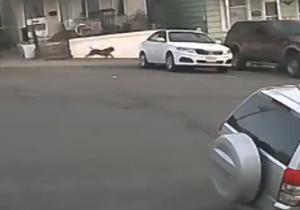 دانلود فیلم دریده شدن یک گربه توسط سگها