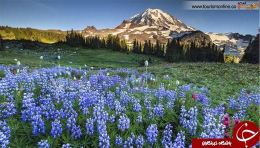 عکس/ این پارک ملی، ۹۵۵ کیلومتر مربع وسعت دارد!