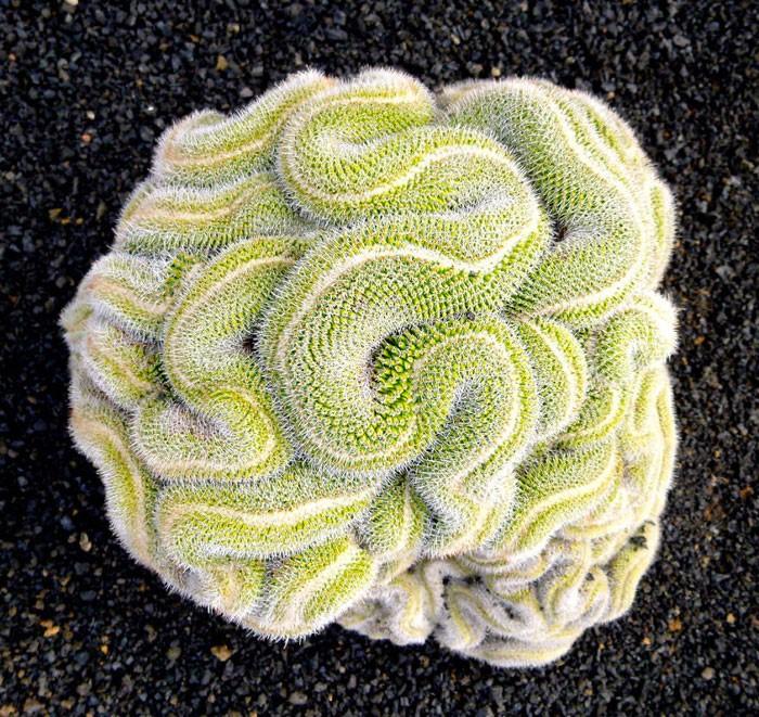 تقارن هندسی در گیاهان+ تصاویر