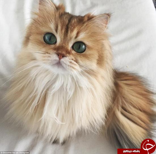 گربه چکمه پوش در دنیای واقعی + تصاویر