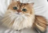 باشگاه خبرنگاران - گربه چکمه پوش در دنیای واقعی + تصاویر