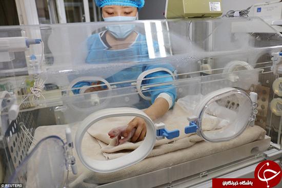 پاندای کوچک که بدون لباس پاندایی به دنیا آمده + تصاویر