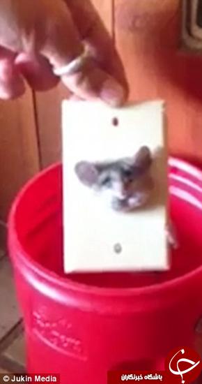 وقتی یک موش بازیگوش در پریز برق گیر میکند + تصاویر