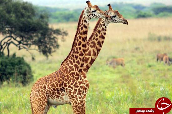 عکسهایی از جانورانی که خیال میکنید عجیب الخلقه هستند + تصاویر