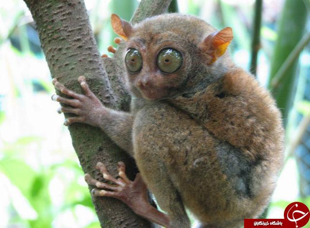 نگاهی به زشت ترین جانوران جهان+تصاویر