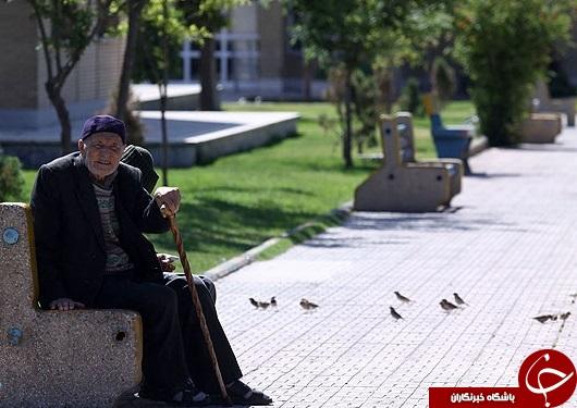 کسانی که بخاطر خوشحالی دیگران چشم انتظار حضرت عزرائیل هستند!+تصاویر