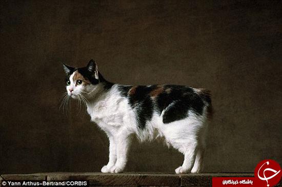 وجود حیوانات عجیب و غریب- از گربه بی دم گرفته تا سگ خوکی شکل