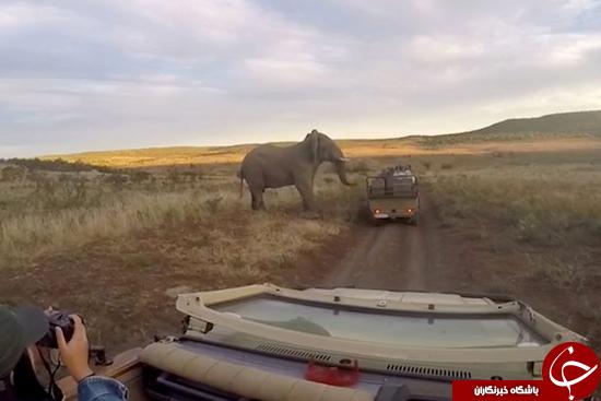 فیلی که برای گرفتن سلفی بی قراری میکند + تصاویر