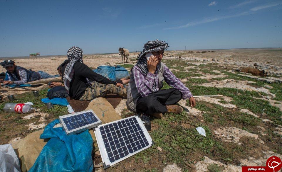 چوپان مدرن از الاغ انرژی خورشیدی می گیرد+عکس