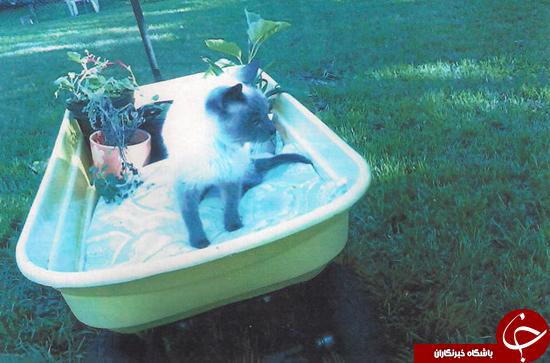 مسن ترین گربه جهان + تصاویر
