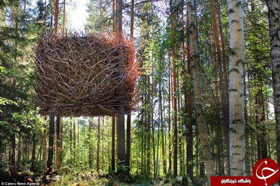 زیباترین خانههای درختی در گوشه و کنار جهان +تصاویر
